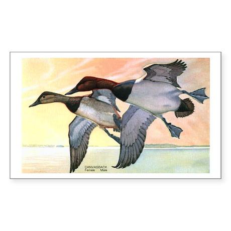 Canvasback Duck Rectangle Sticker