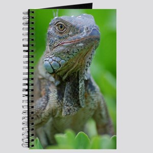 Smug Mug of an Iguana Journal