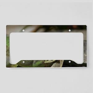 Iguana! License Plate Holder