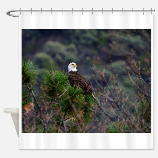 Bald Eagle On A Pine Tree Shower Curtain