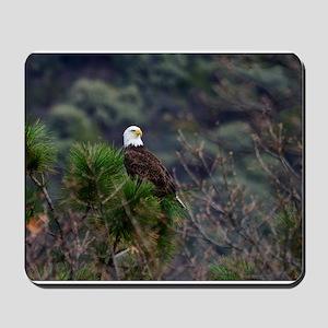 Bald Eagle on a Pine Tree Mousepad