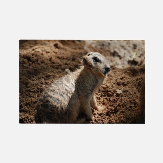 Meerkat with a Very Dirty Face Rectangle Magnet