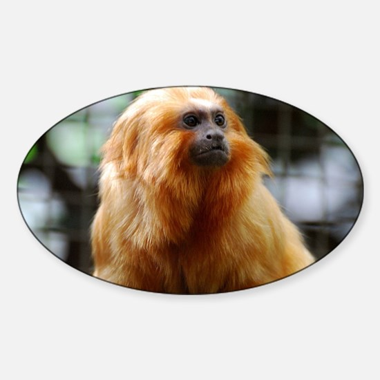 Adorable Red Tamarin Monkey Sticker (Oval)