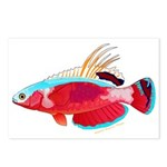 Spot-lined flasher wrasse Postcards (Package of 8)