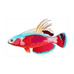 Spot-lined flasher wrasse Wall Decal