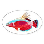 Spot-lined flasher wrasse Sticker