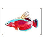Spot-lined flasher wrasse Banner