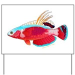 Spot-lined flasher wrasse Yard Sign