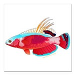 Spot-lined flasher wrasse Square Car Magnet 3