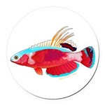 Spot-lined flasher wrasse Round Car Magnet