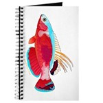 Spot-lined flasher wrasse Journal