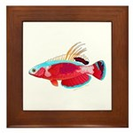 Spot-lined flasher wrasse Framed Tile