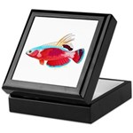Spot-lined flasher wrasse Keepsake Box