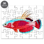 Spot-lined flasher wrasse Puzzle