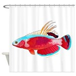Spot-lined flasher wrasse Shower Curtain