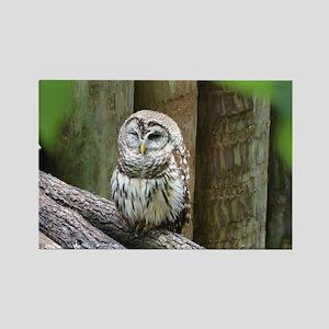 Cute Little Owl Rectangle Magnet