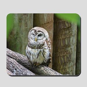 Cute Little Owl Mousepad