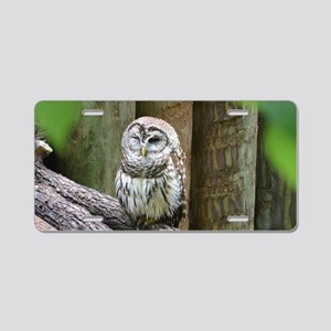 Cute Little Owl Aluminum License Plate