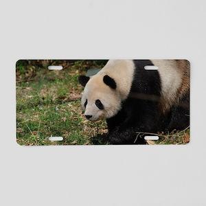 Giant Panda Bear Meandering Aluminum License Plate