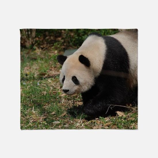Giant Panda Bear Meandering Along Throw Blanket