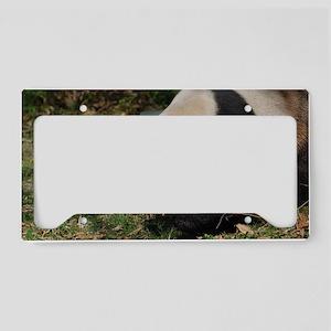 Giant Panda Bear Meandering A License Plate Holder
