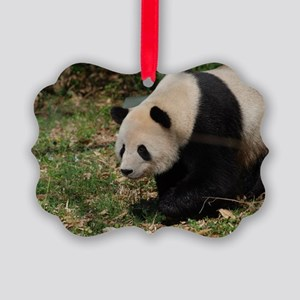 Giant Panda Bear Meandering Along Picture Ornament
