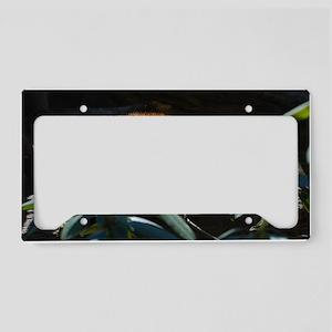 Sleeping Red Panda License Plate Holder