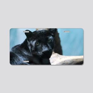 Curious Black Panther Cat Aluminum License Plate