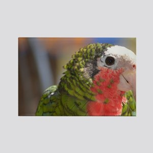 Sweet Conure Bird Rectangle Magnet