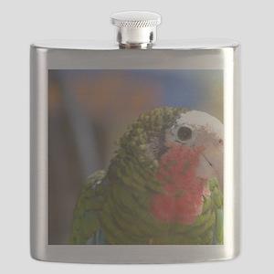 Sweet Conure Bird Flask