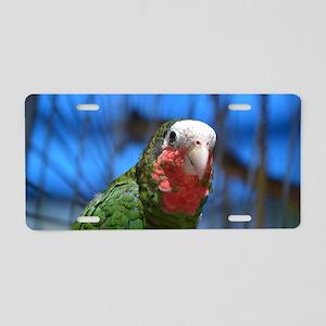 Exotic Conure Bird Aluminum License Plate
