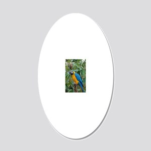 Blue and Gold Macaw 20x12 Oval Wall Decal