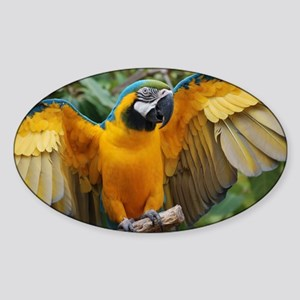 Macaw Wings Sticker (Oval)