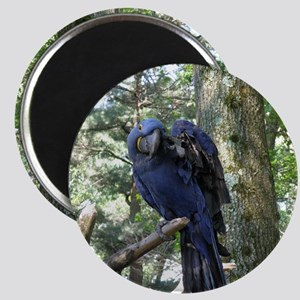 Blue Macaw in a Tree Magnet