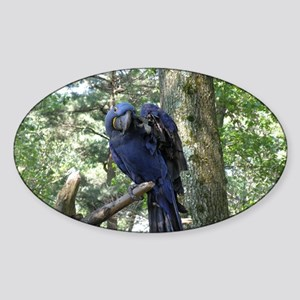 Blue Macaw in a Tree Sticker (Oval)