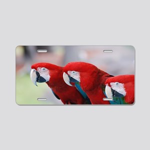 Trio of Scarlet Macaws Aluminum License Plate