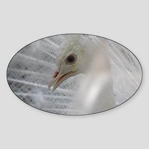 White Peacock Sticker (Oval)