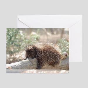 Sleeping Porcupine Greeting Card