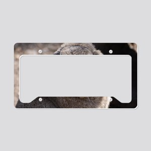 Lop Eared Rabbit License Plate Holder