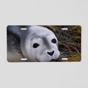 Cute Seal Pup Aluminum License Plate