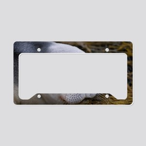 Cute Seal Pup License Plate Holder