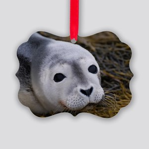 Cute Seal Pup Picture Ornament