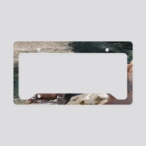 Sea Lion Pup License Plate Holder