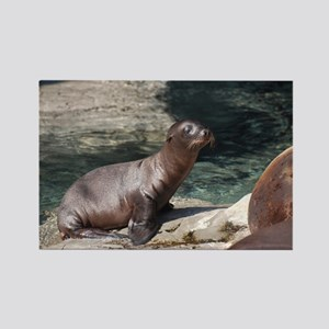 Sea Lion Pup Rectangle Magnet