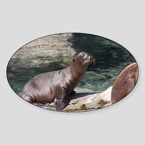 Sea Lion Pup Sticker (Oval)