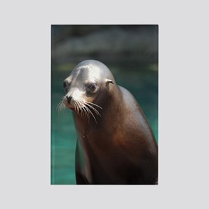 Adorable Sea Lion Rectangle Magnet