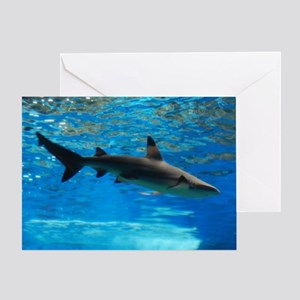 Black Tipped Shark Greeting Card