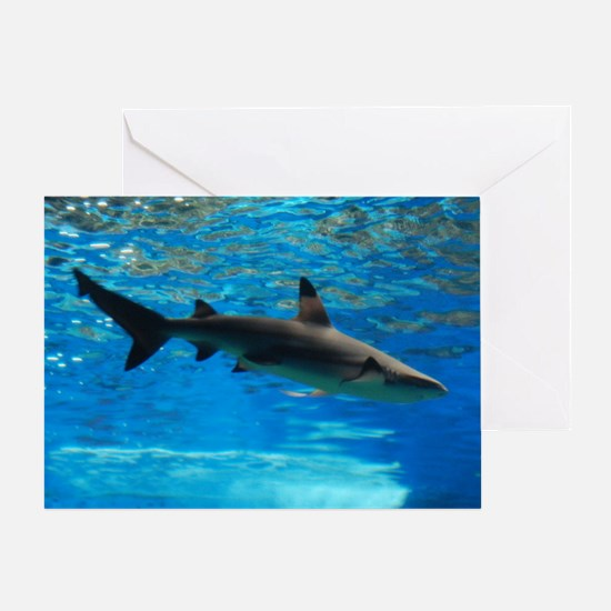 Black Tipped Shark Greeting Card