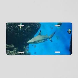 Swimming Black Tipped Shark Aluminum License Plate