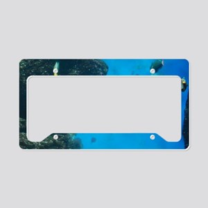 Swimming Black Tipped Shark License Plate Holder